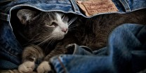 Cat With Levi's Label